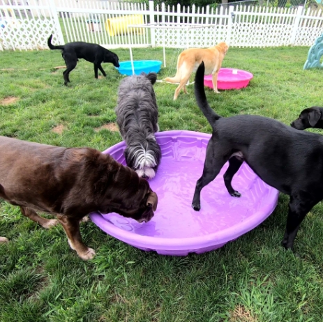 Outside Dog Play Area With Pool