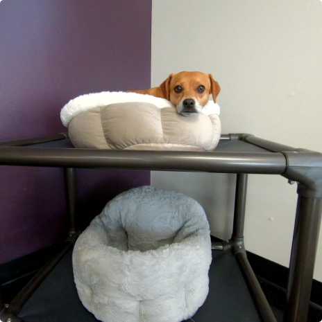 Indoor dog daycare and boarding facility with a small dog in a raided bed